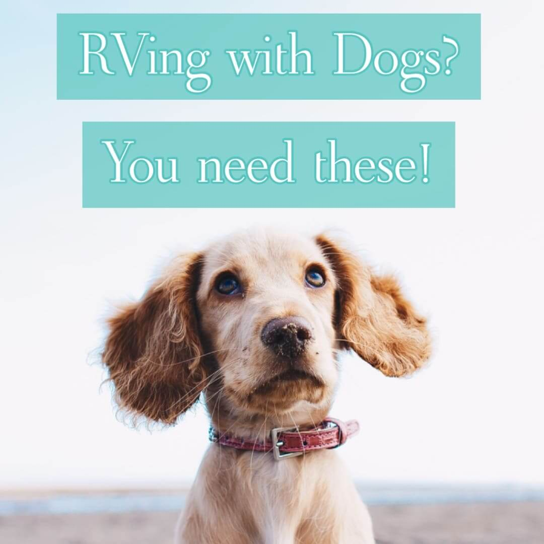 Top 10 Items you need for RVing with Dogs
