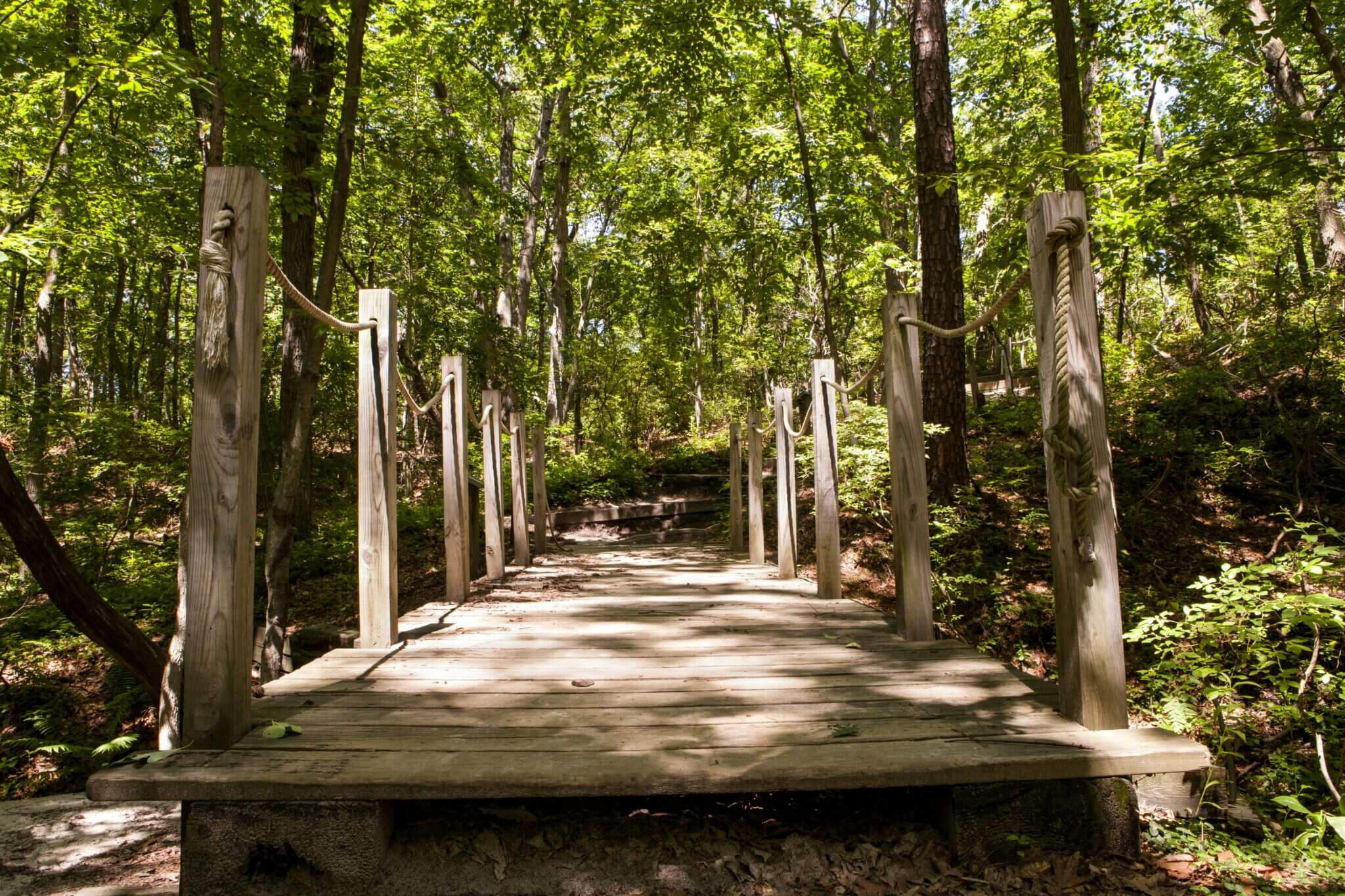 A foot bridge over the creek in Cheesequake State Park