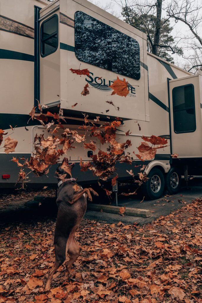 Dog jumping in the air biting at fall leaves in front of an RV. RVers need pet insurance to protect them.