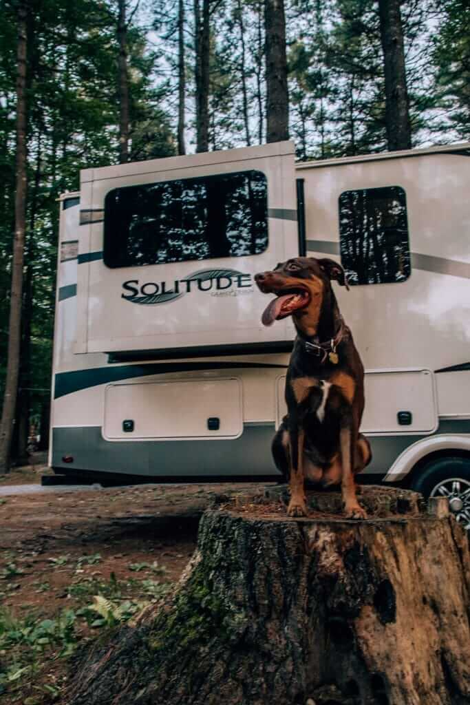 Dog sitting on a stump in front of an RV smiling because she knows all RVers need pet insurance.