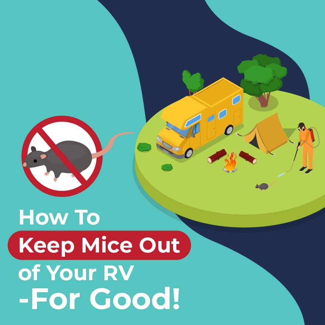 How To Keep Mice Out of Your RV