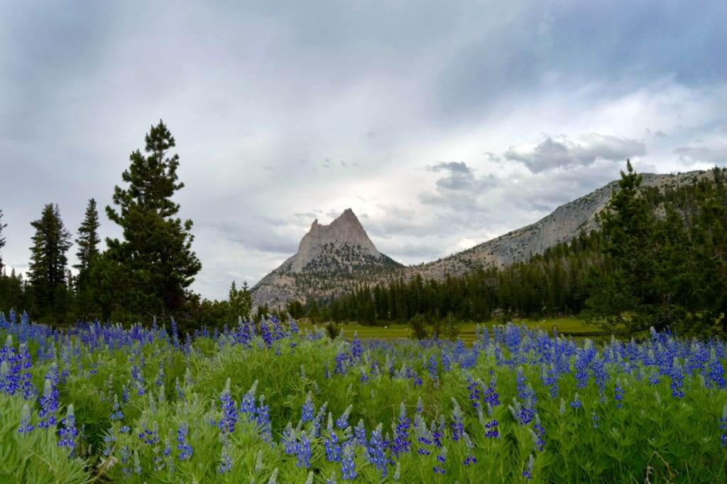 Tuolumne Meadows at Yosemite National Park. This is one of the gorgeous things to do at Yosemite National Park.
