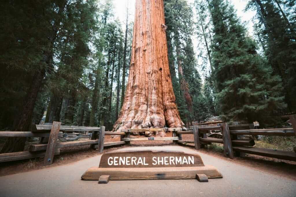 General Sherman plaque with the giant tree in the background in Sequoia National Park