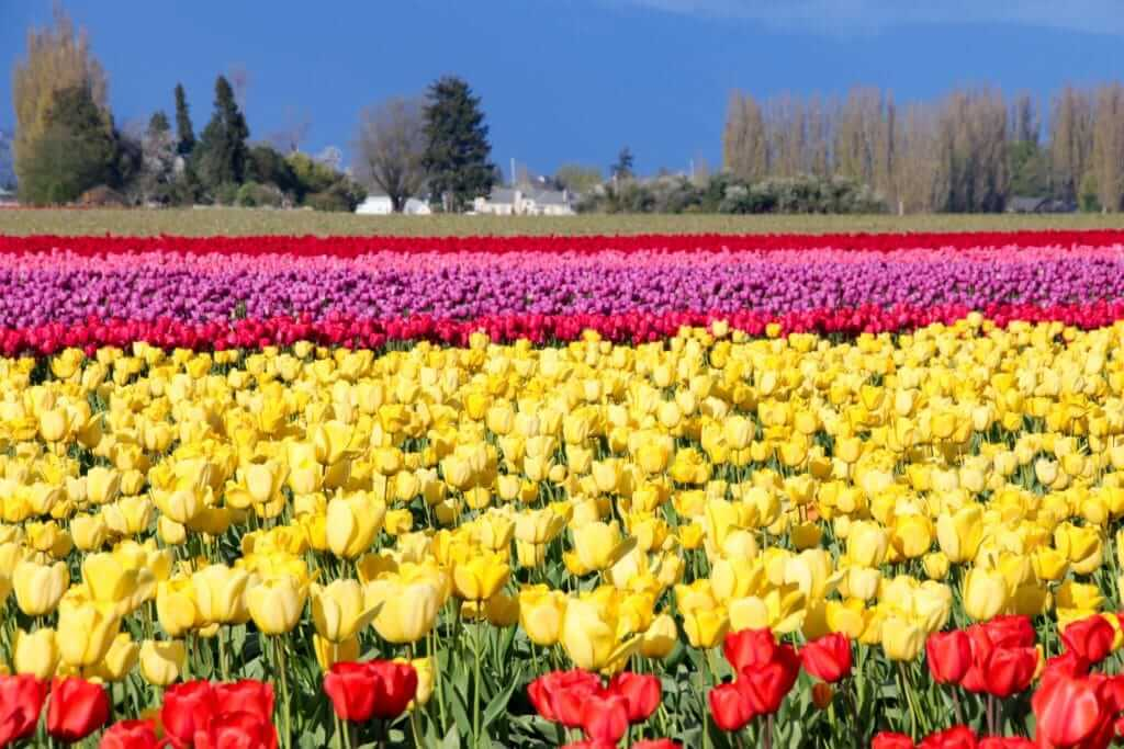 Different colored flowers in rows