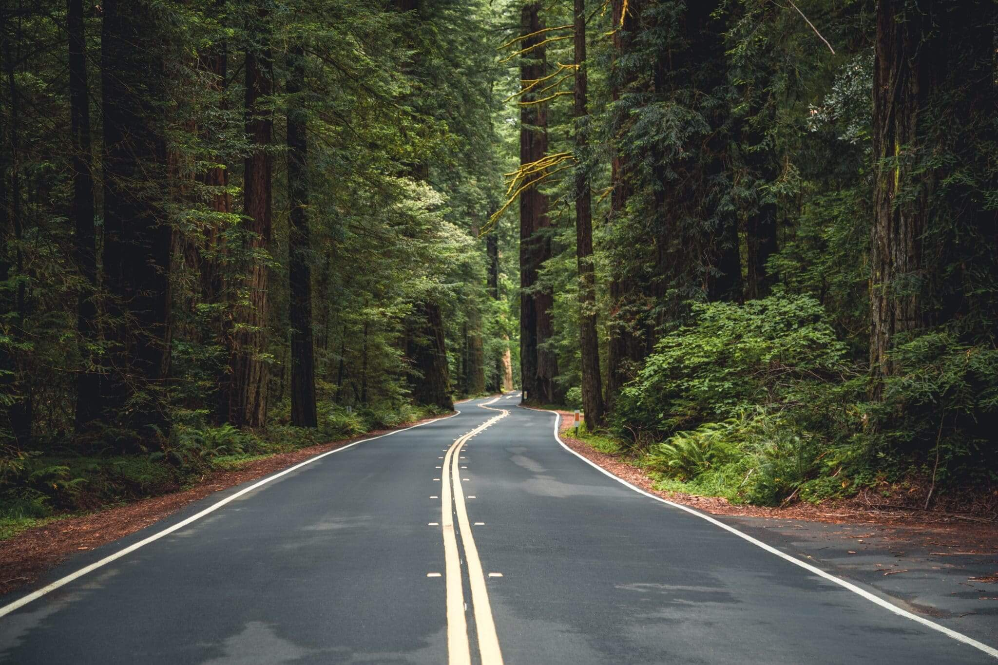 road in redwood national park
