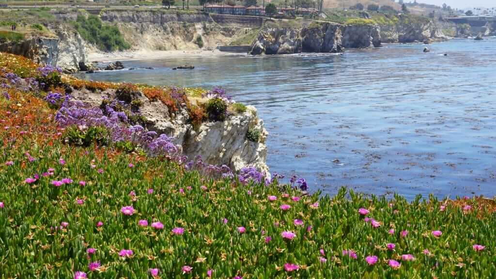 Coastal view at Pismo Beach with flowers in the foreground and cliffs with the ocean in the background, one of the stops on the Pacific Coast Highway Road Trip