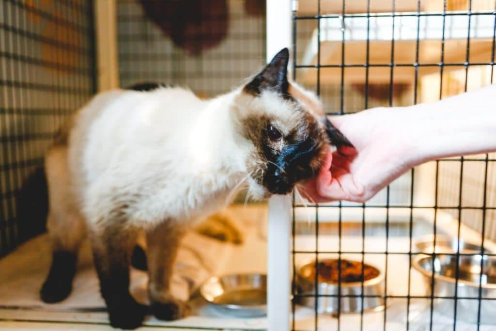 Cat in a cage with an open door being pet by a woman's hand. good sam travel assist will help transport your pet in an emergency.