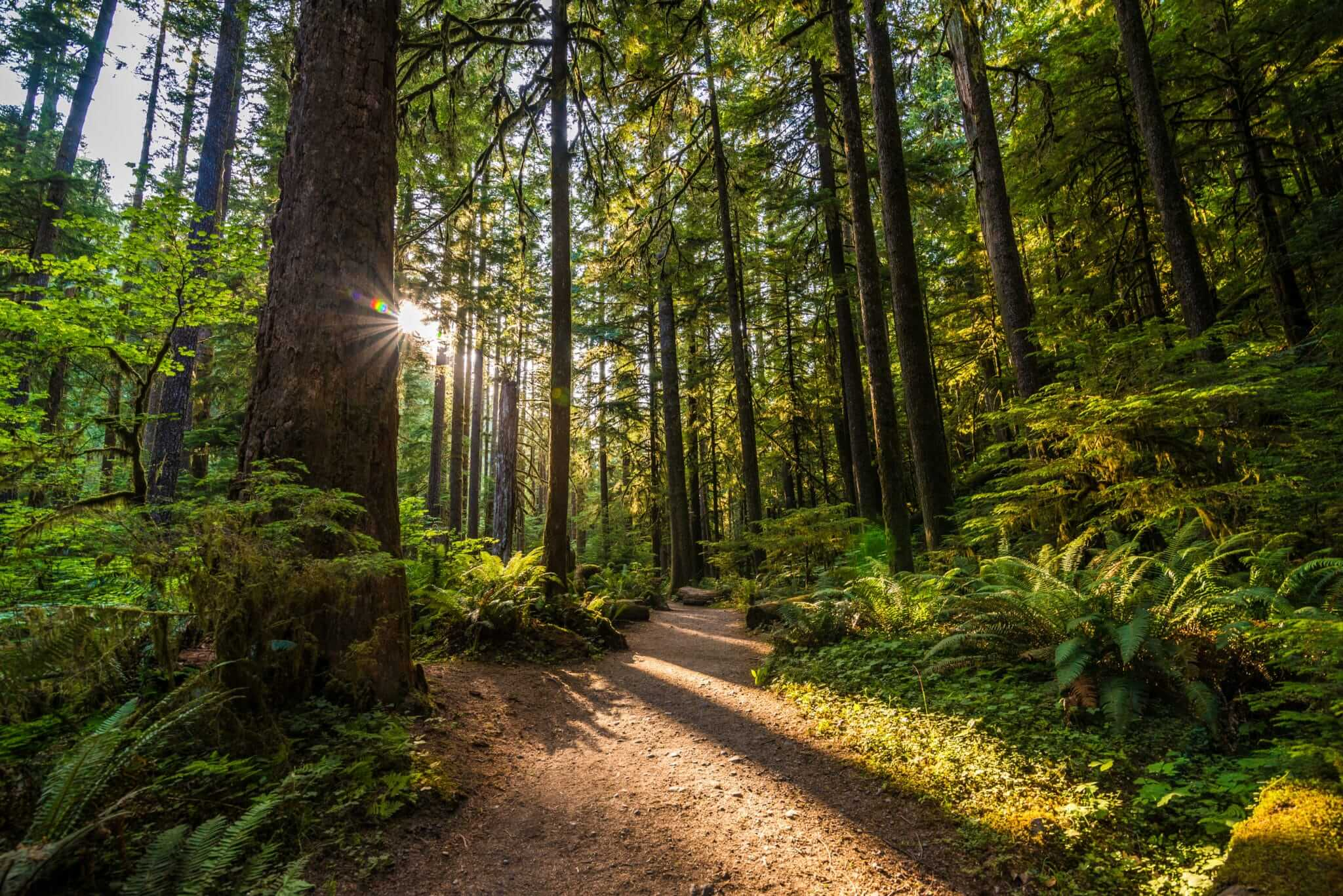 beautiful forest in Washington