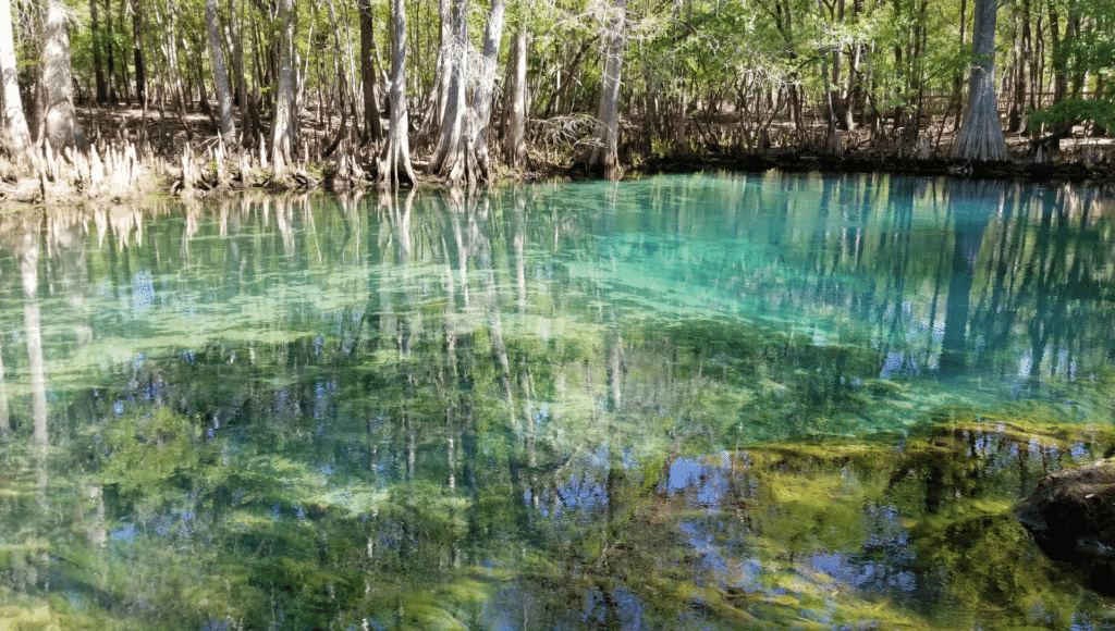 Crystal clear water surrounded by trees is at the Manatee Springs State Park near Chiefland, Florida.