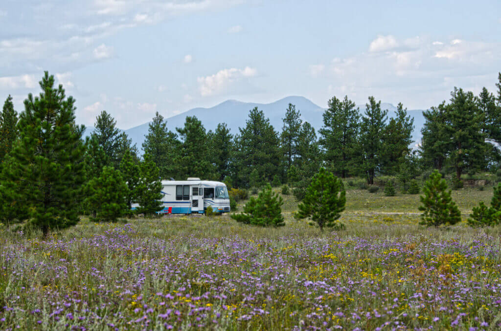 A large Class A motorhome is boondocking in the national forest, surrounded by wildflowers. When you ask what is boondocking, picture yourself here.