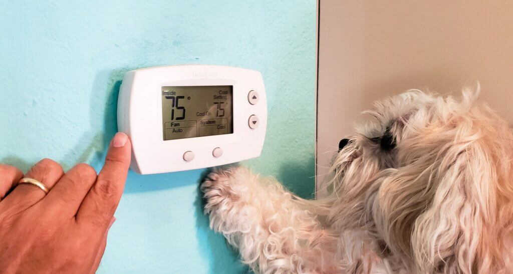 Dog setting the temperature on one of the best RV thermostats to stay cool