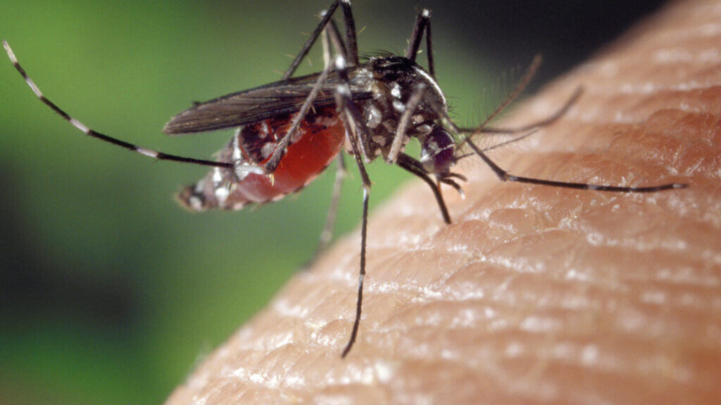 A mosquito lands on a person and is about to bite them.