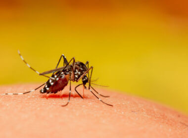 A mosquito bites a person and gets blood from them, can they also transmit Covid-19?