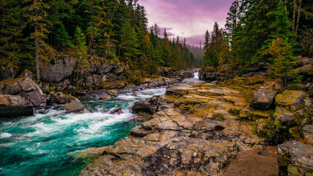The bright teal Snake River runs through a forest in Montana.
