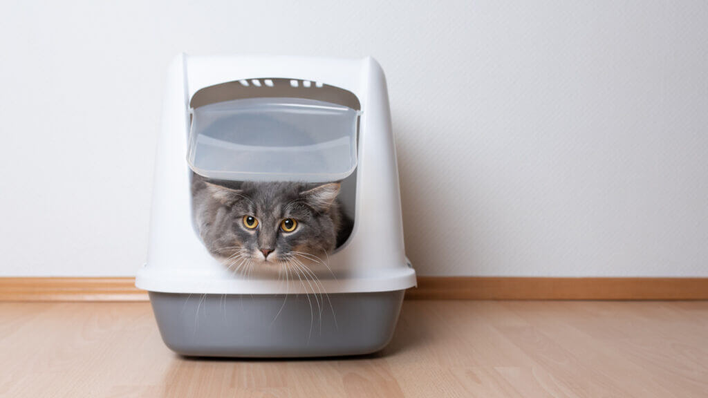 A cat sits in a litter box and looks upset.