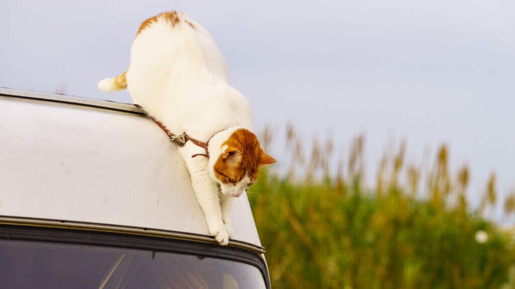 A cat climbs down the side of an RV.