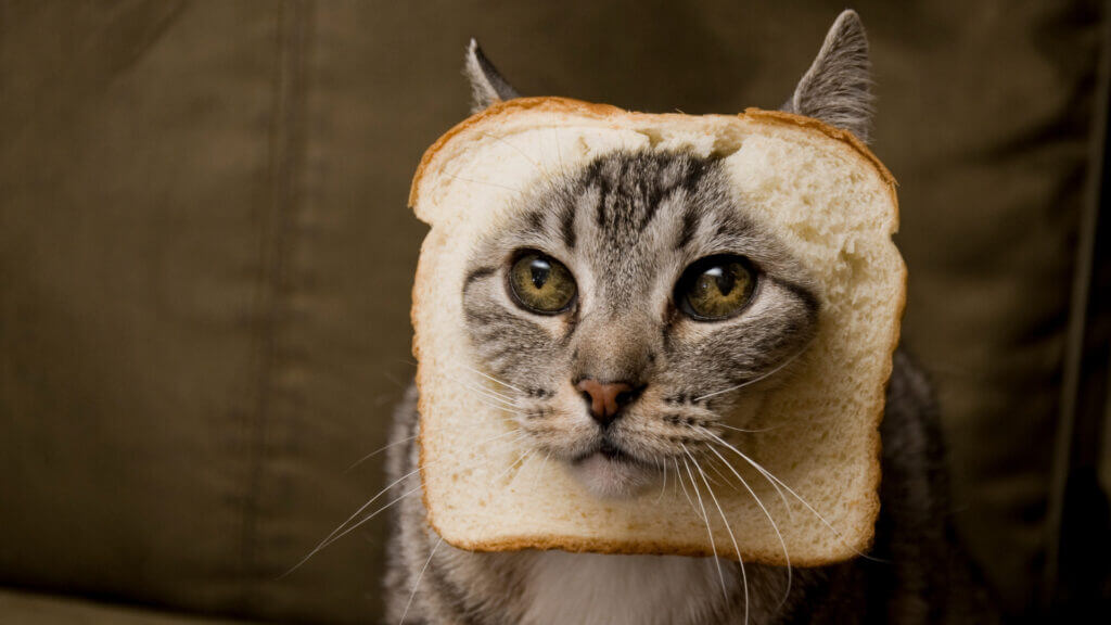 A cat sits with its face in a piece of bread.