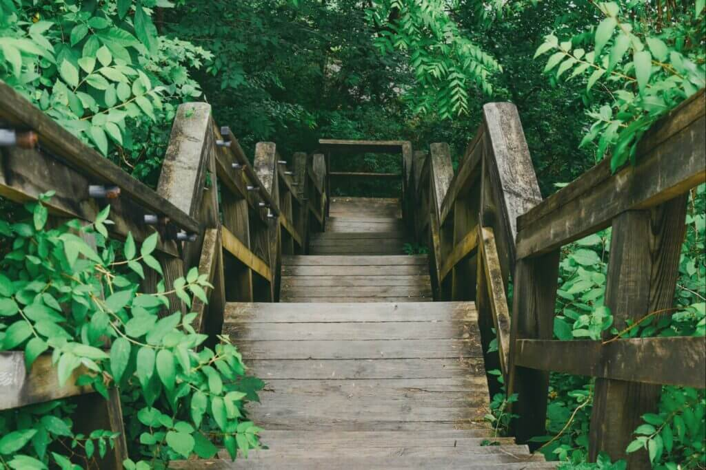 A wooden trail with lots of fern leading to a red river gorge camping area