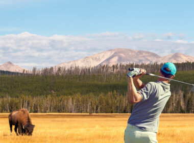 A golfer swings into Yellowstone Park field with a bison grazing.