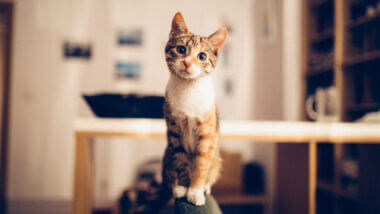 A cat sits on a perch and stares straight ahead looking cute.