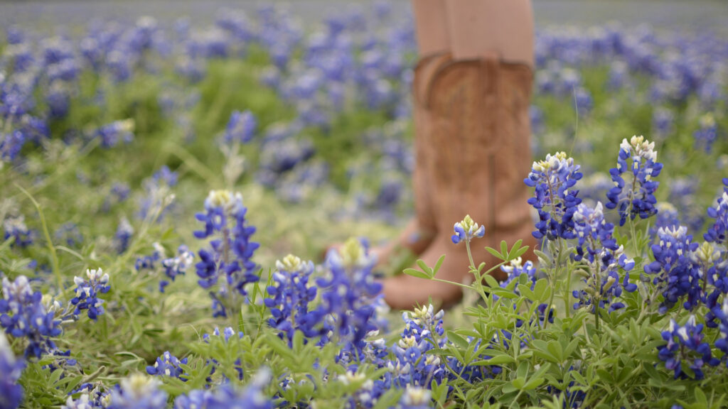 A woman in cowboy boots stands in a field of Blue Bonnets, Texas' state flower.