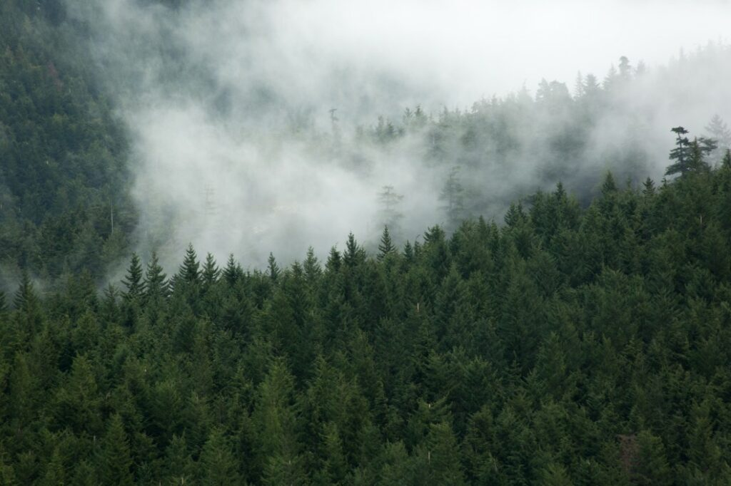 Gloomy, mist in the mountains of a forested park in Washington which is home to haunted RV parks
