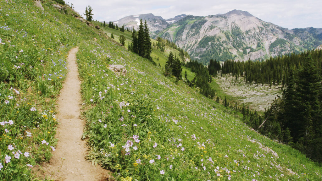 A mountain trail with wildflowers along the side.
