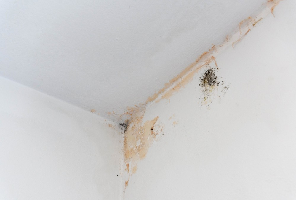 Interior wall in home with mold and mildew stains.