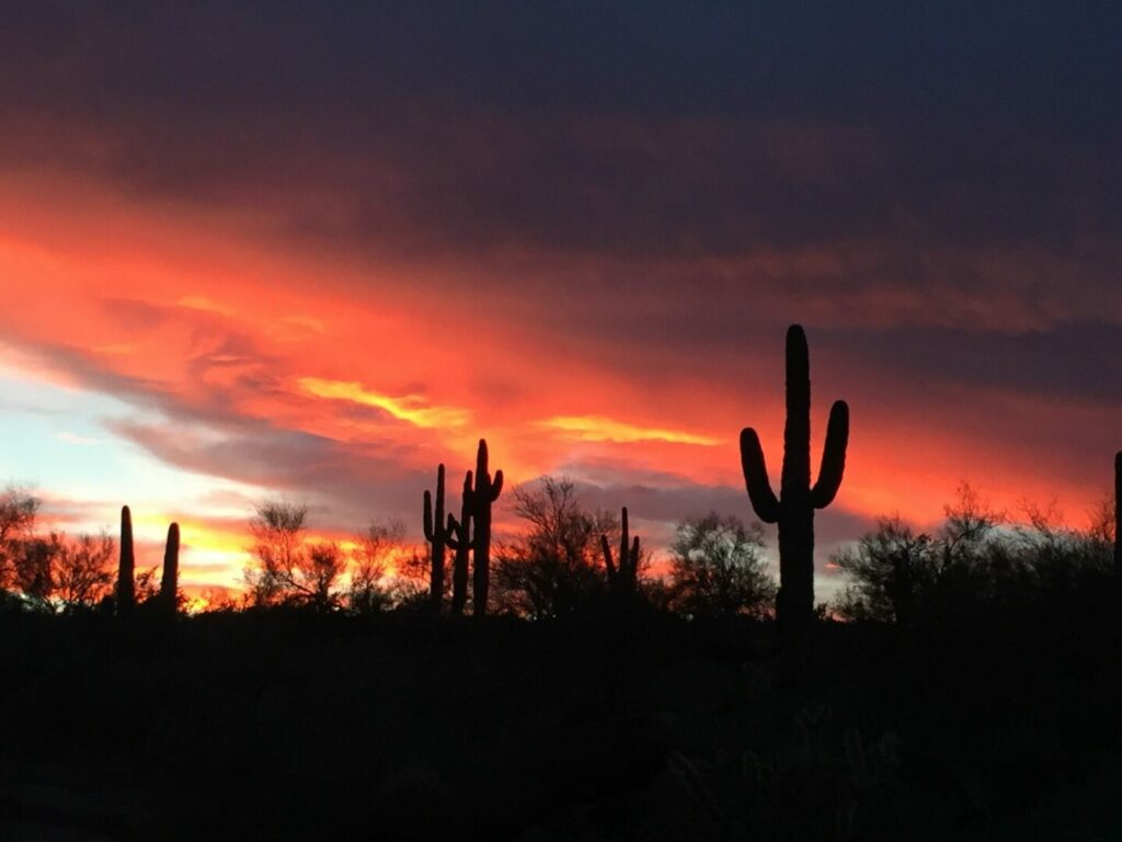 Silhouettes of tall Saguaro cacti in front of a pink and purple sunset in Arizona