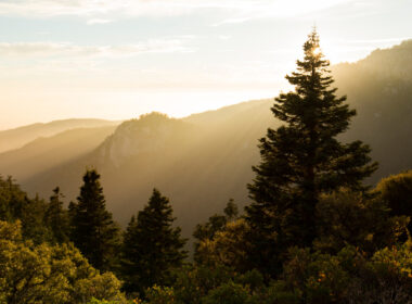 A sunny morning in the Idyllwild mountains with trees and mountains all around.